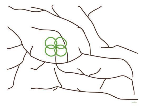 avalisa-green-poppy-tree