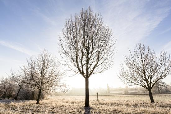 axel-brunst-ditzingen-baden-wuerttemberg-germany-wintery-landscape-in-morning-covered-fog-frost