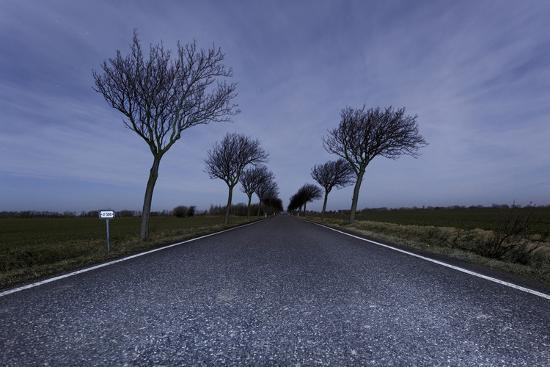axel-schmies-highway-crooked-trees-at-full-moon-by-night-orth-island-fehmarn-schleswig-holstein-germany