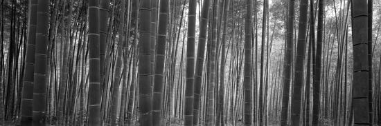 bamboo-forest-sagano-kyoto-japan