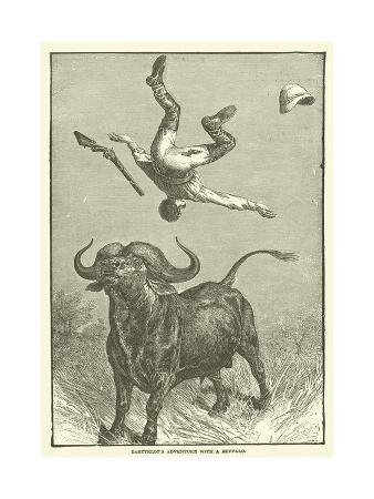 barttelot-s-adventure-with-a-buffalo