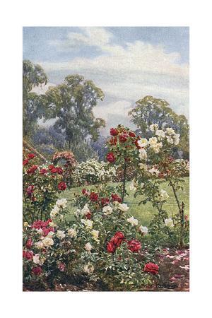 beatrice-parsons-garden-newtown-house
