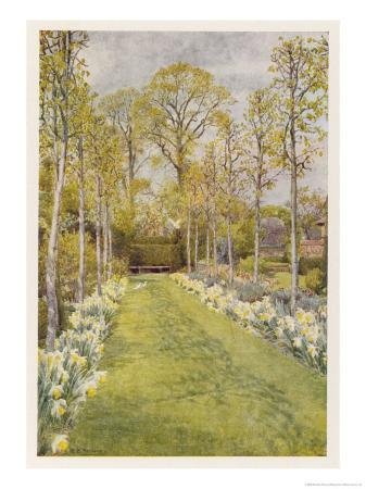 beatrice-parsons-looking-down-a-grass-path-with-a-bed-of-daffodils-and-trees-on-either-side