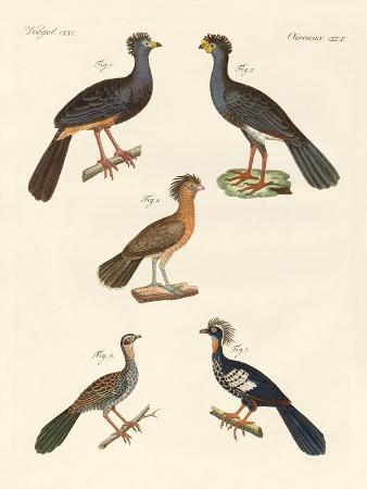 beautiful-new-birds