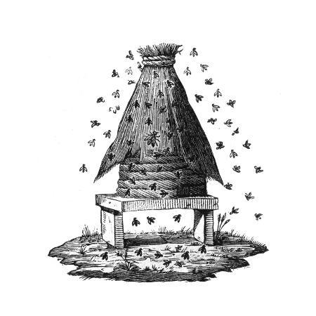 beehive-and-bees