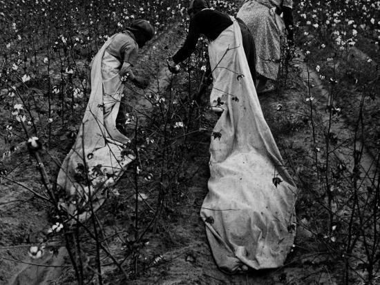 ben-shahn-young-african-american-cotton-pickers-standing-in-the-cotton-field-with-their-sacks