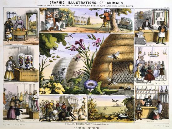 benjamin-waterhouse-hawkins-the-bee-c1850