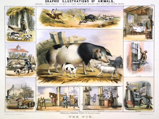 benjamin-waterhouse-hawkins-the-pig-c1850