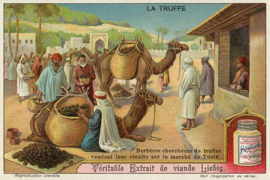 berbers-inspect-the-truffles-for-sale-in-the-market-in-tunis