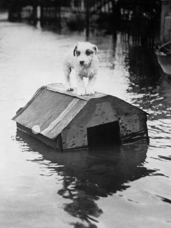 bettmann-dog-floating-on-doghouse