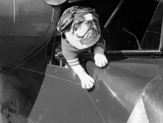 bettmann-dog-flying-in-aircraft