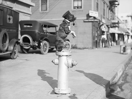 bettmann-dog-seated-on-fire-hydrant
