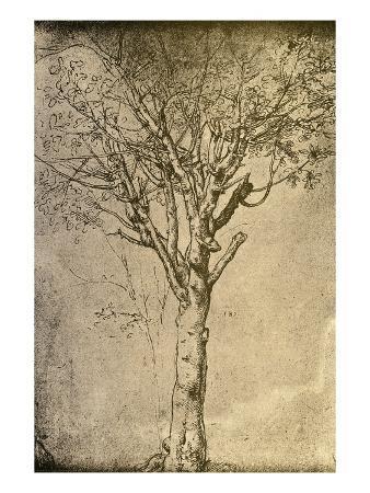 bettmann-drawing-a-tree-by-leonardo-da-vinci