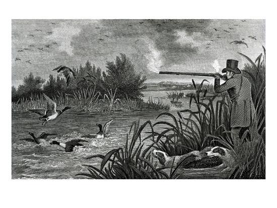 bettmann-engraving-of-duck-shooting