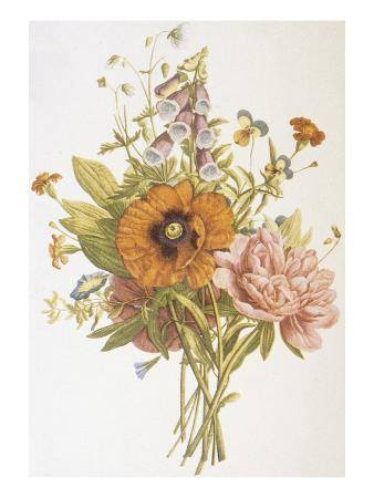 bettmann-illustration-depicting-a-bouquet-of-poppies-carnations-and-foxglove