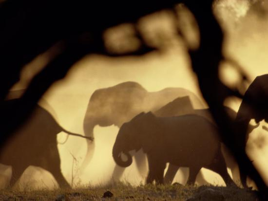 beverly-joubert-african-elephants-on-the-move-during-the-dry-season