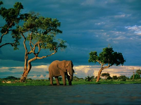 beverly-joubert-elephant-by-a-water-hole-on-the-african-plain