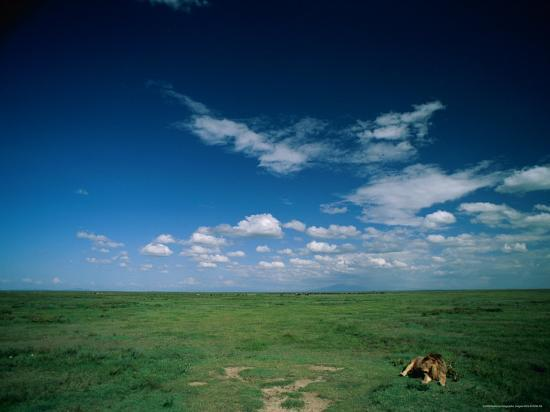 beverly-joubert-lion-resting-on-the-vast-savanna