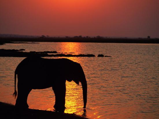 beverly-joubert-silhouetted-african-elephant-drinking-water
