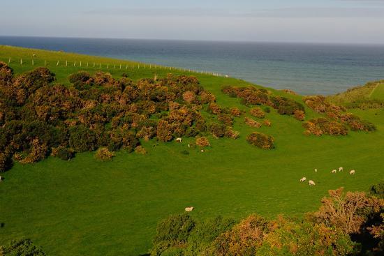 bhaskar-krishnamurthy-sheep-and-the-rolling-hills-to-the-ocean-otago-south-island-new-zealand-pacific