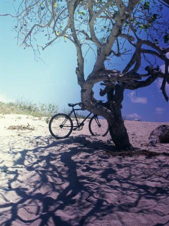 bicycle-parked-against-a-tree