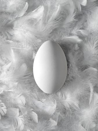 biddle-biddle-egg-on-feathers-conceptual-image