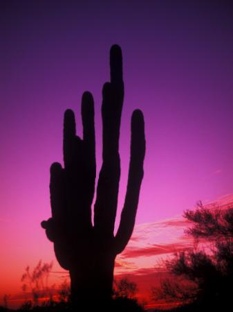 bill-bachmann-colorful-cactus-in-the-sunset-arizona-usa