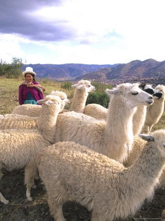 bill-bachmann-inca-woman-in-costume-with-llamas-cuzco-peru