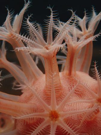 bill-curtsinger-a-mushroom-soft-coral-in-the-deep-sea-collection-at-the-monterey-bay-aquarium