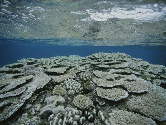 bill-curtsinger-an-underwater-view-of-coral-on-rongelap-reef