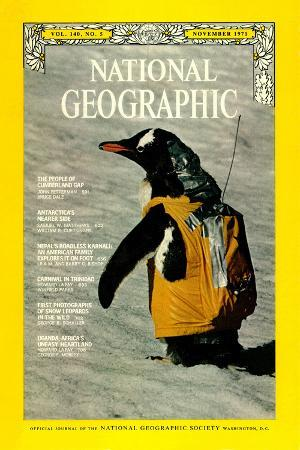 bill-curtsinger-cover-of-the-november-1971-national-geographic-magazine