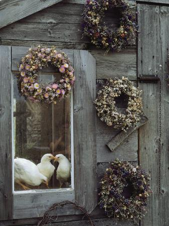 bill-curtsinger-dried-flower-wreaths-adorn-a-wooden-wall-near-a-window-with-doves