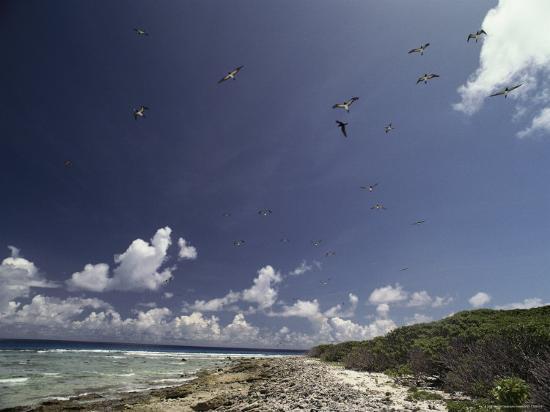 bill-curtsinger-sea-birds-fly-over-a-shore-at-bikini-atoll