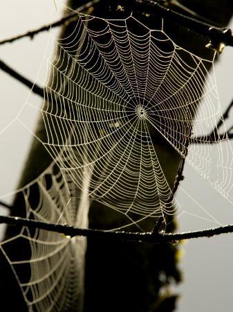bill-hatcher-spiderweb-on-a-branch