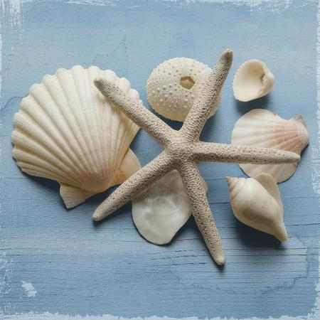 bill-philip-shell-collection-i
