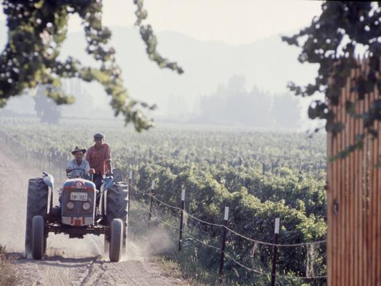 bill-ray-workers-on-a-tractor-at-the-conchay-toro-vineyards-chile