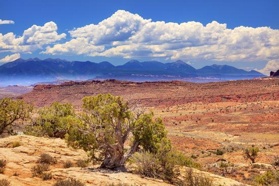 billperry-painted-desert-boulders-yellow-sandstone-la-salle-mountains-arches-national-park-moab-utah