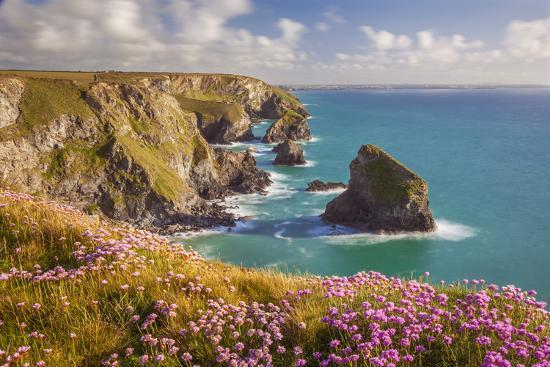 billy-stock-pink-thrift-flowers-bedruthan-steps-newquay-cornwall-england-united-kingdom