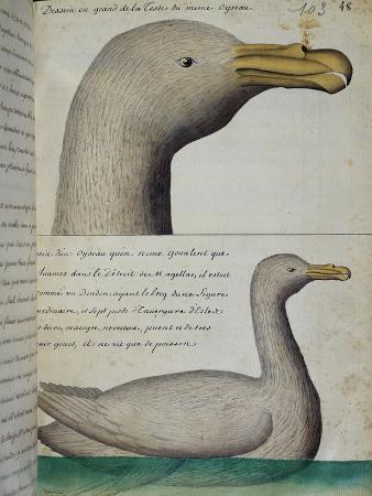 bird-from-strait-of-magellan