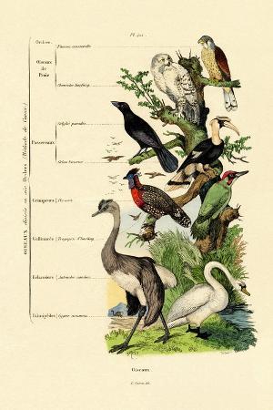 birds-1833-39