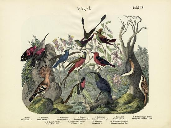 birds-c-1860