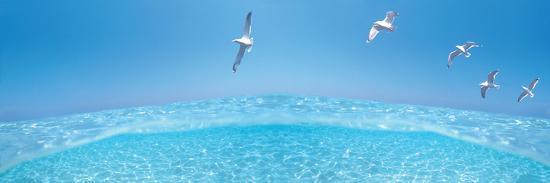 birds-flying-over-sea