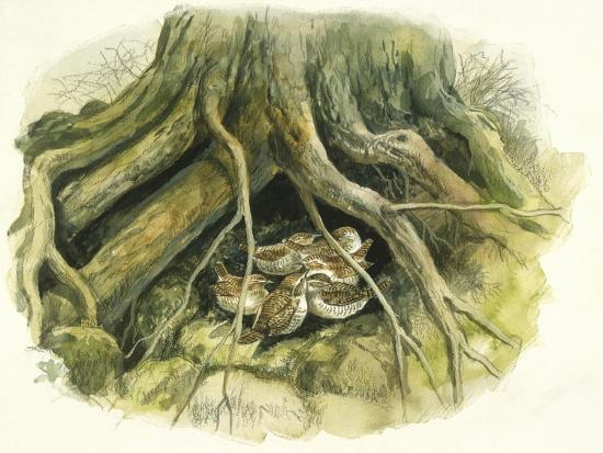 birds-passeriformes-winter-wrens-troglodytes-troglodytes-hollow-of-tree-trunk