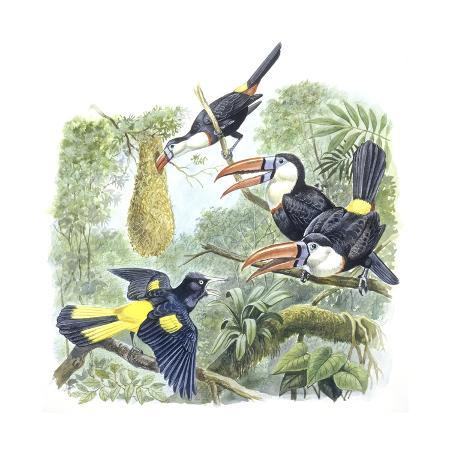 birds-piciformes