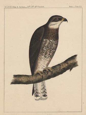 birds-plate-xiii-1855