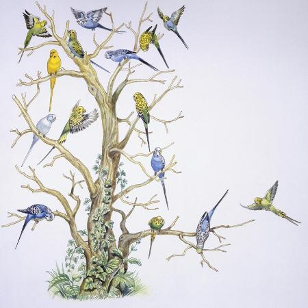 birds-psittaciformes-budgerigar-melopsittacus-undulatus-on-tree