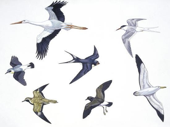 birds-white-stork-ciconiiformes