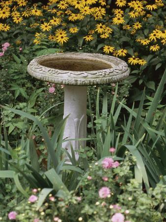 black-eyed-susans-and-chrysanthemums