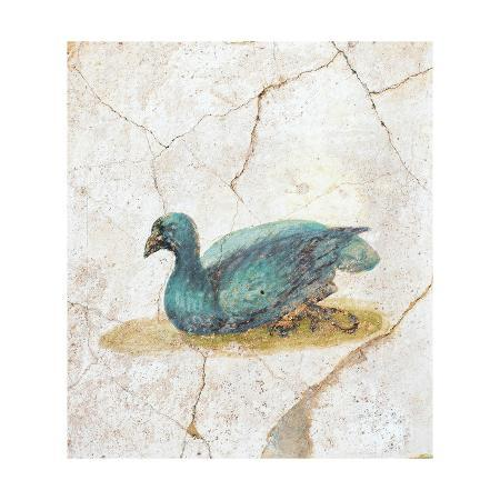 blue-feathered-duck-c-10-45