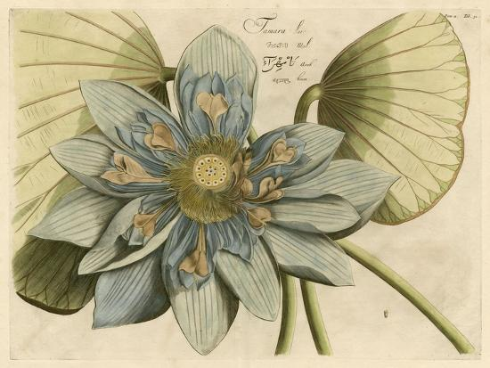 blue-lotus-flower-i